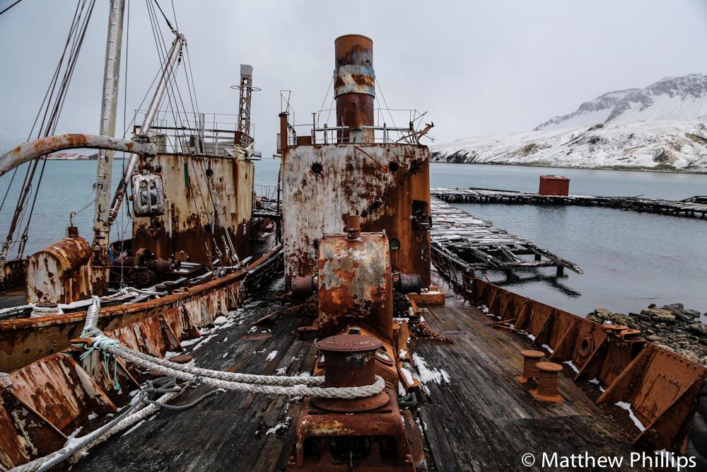 Viola, Grytviken.