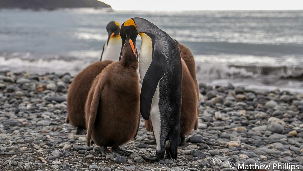 South Georgia, Antarctica, May 2015 -57