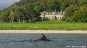 Dolphin in front of Raasay House, Isle of Raasay.